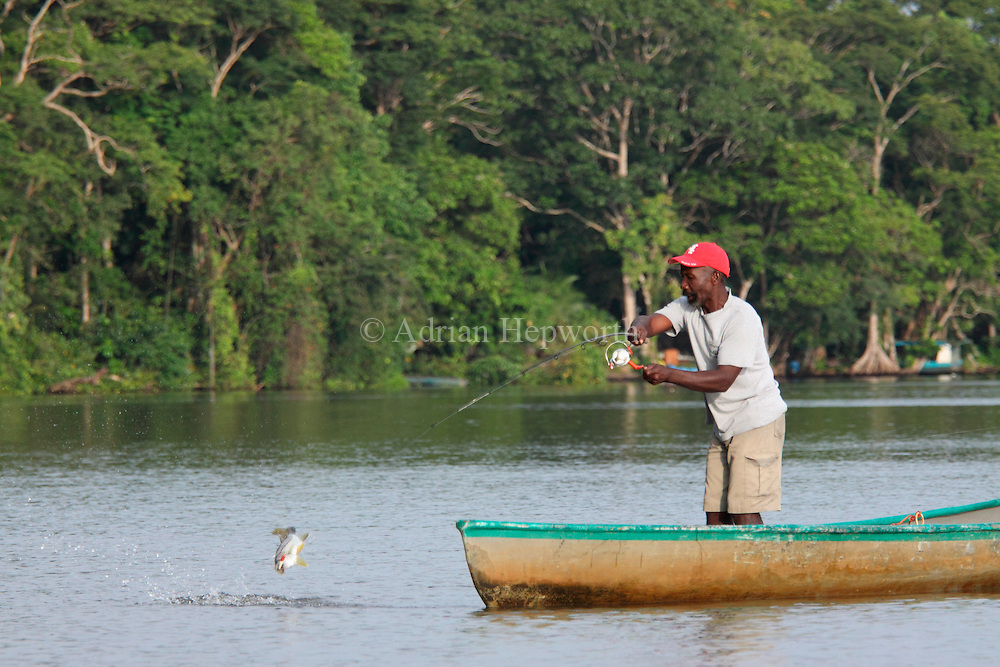 Local fisherman catching a fish on natural rainforest canal. Tortuguero National Park. Costa Rica. <br />