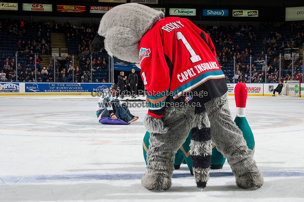 KELOWNA, CANADA - JANUARY 3: Rocky Raccoon, the  mascot of the Kelowna Rockets stands on the ice for human bowling during intermission against the Tri-City Americans on January 3, 2017 at Prospera Place in Kelowna, British Columbia, Canada.  (Photo by Marissa Baecker/Shoot the Breeze)  *** Local Caption ***
