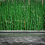 Reeds and planter detail of stormwater facilities, Vera Katz Sliver Park, Portland, Oregon.