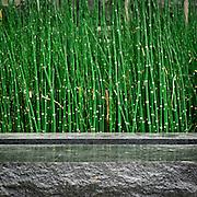 Reeds and planter detail of stormwater facilities, Vera Katz Sliver Park, Portland, Oregon.