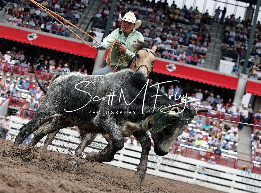 Team Ropers TYREL NEIL BLASINGAME and JESSE ALAN ECHTLER secure the steer in an impressive 11.8 seconds, 27 July 2007, Cheyenne Frontier Days