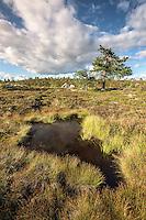 Sumpf im Riisitunturi Nationalpark bei Kuusamo
