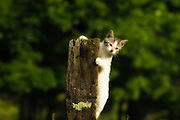 Kitten on fence post