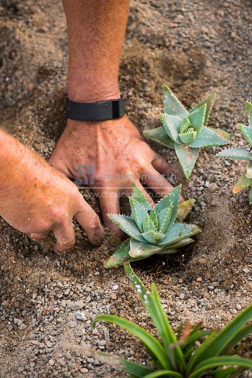 steppe garden 1st planting volunteers