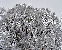 Snowy Tree. Late Autumn Backyard Nature in New Jersey. Image taken with a Nikon Df camera and 58 mm f/1.4 lens (ISO 100, 58 mm, f/4, 1/320 sec)