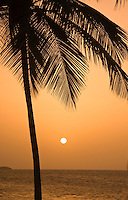 Colorful palm tree sunsets of the Caribbean