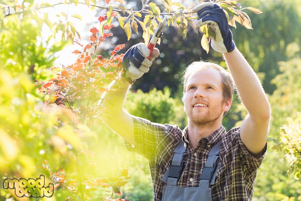 Young man cutting branch in garden