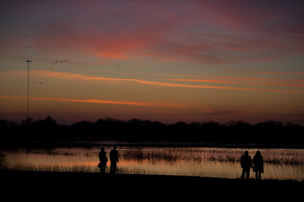 The sunset tour for the 5th Annual Winter Bird Festival at the Cosumnes River Preserve.