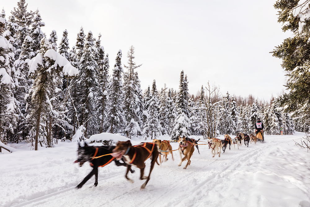 Musher Hyunchul Nikki Seo competing in the Fur Rendezvous World Sled Dog Championships at Goose Lake Park in Anchorage in Southcentral Alaska. Winter. Afternoon.