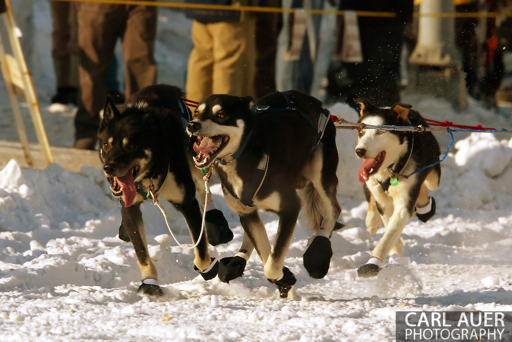 3/3/2007:  Anchorage Alaska -  The lead dogs of Rookie Silvia Willis of Deshka River, AK fly down the street during the Ceremonial Start of the 35th Iditarod Sled Dog Race