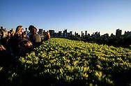 New York. Metropolitan museum rooftop. garden  has an elavetd view on central park and Manhattan  cityscape  /  bar sur la La terrasse du MET, Metropolitan museum of art, devant le panorama de central park