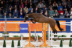252, Lay Out<br /> KWPN Hengstenkeuring - 's Hertogenbosch 2019<br /> © Hippo Foto - Dirk Caremans<br /> 30/01/2019