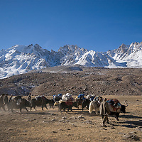 Herders with a yak team. Big Pamir, Afghanistan.