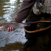 ASHEVILLE, NC - OCTOBER 31: Woody Platt holds a rainbow trout caught by fly fishing in a stream near Brevard in the Appalachian Mountains outside Asheville in North Carolina. (Photo by Logan Mock-Bunting) Fly-fishing near Brevard, NC