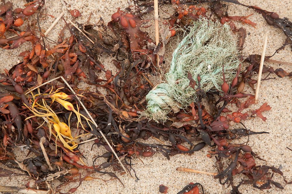 Rockweed and a piece of frayed and knotted rope were left on the beach by the retreating tide.