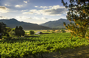 Valley View Winery vineyards, Applegate Valley, Southern Oregon.