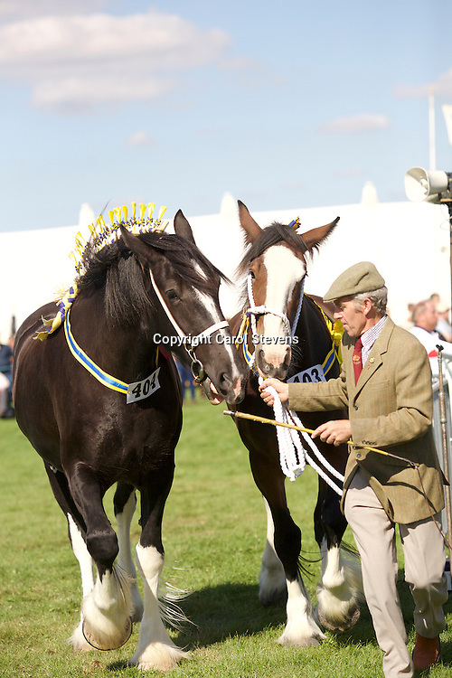 David Cosgrove<br /> Pairs Class<br /> Left - Hinton Tiara (1st 3 year old Class)<br /> Right  - 2 year old