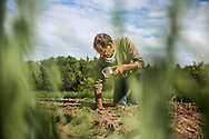 Jay Robinson plants squash at Sweetland Farm in Starks, ME.  Jay has been producing food for Good Shepherd Food Bank since the beginning of the Mainers Feeding Mainers program.