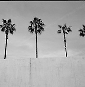 Los Angeles, LACMA, palms