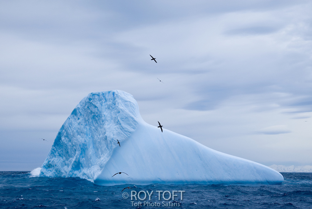 Birds circling an iceberg off the coast of South Georgia Island