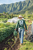 GoFarm Hawaii New Farmer Program