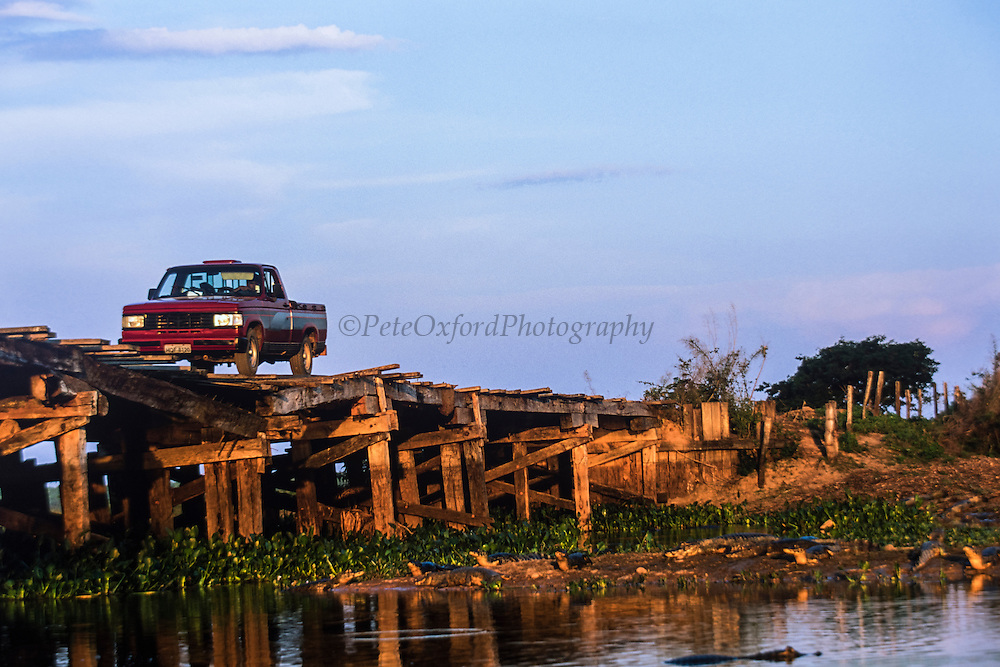 Wooden bridges & Yacare caiman (Caiman yacare)<br /> Northern Pantanal<br /> Transpantaneira highway<br /> Mato Grosso<br /> BRAZIL, South America