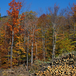 White Mountain N.F., NH. Beebe River Road. Logging.