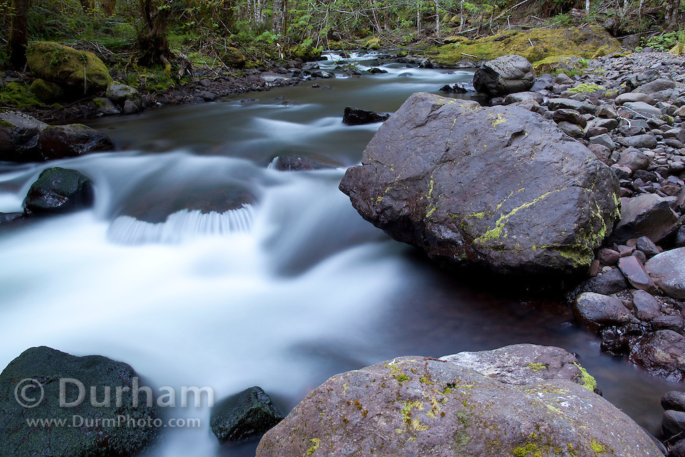 The north fork of the Salmonberry River, western Oregon.