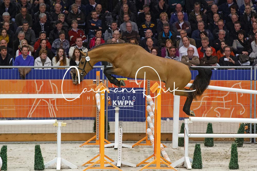 185 - Glorieus GR<br /> KWPN Stallion Selection - 's Hertogenbosch 2014<br /> © Dirk Caremans