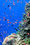 Fish on tropical coral reef - Agincourt reef, Great Barrier Reef, Queensland, Australia.