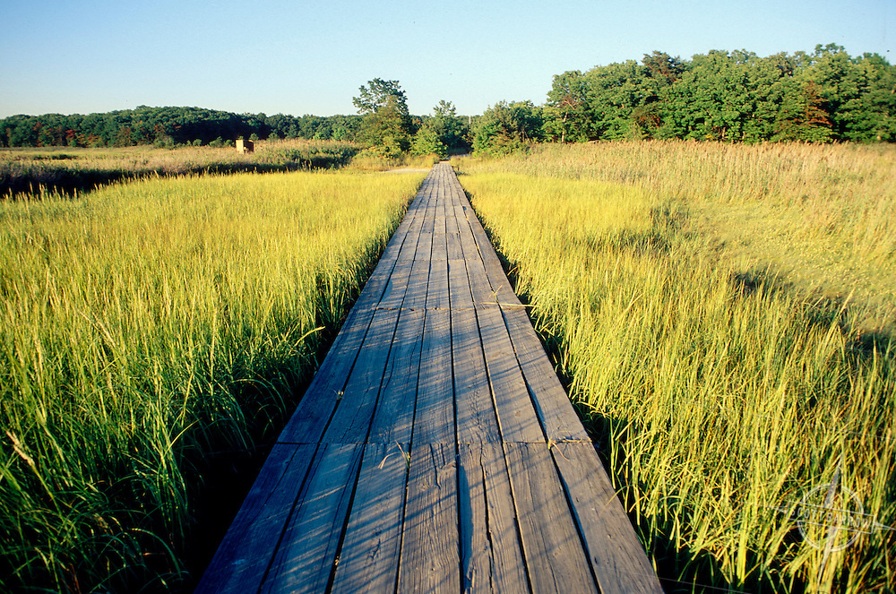 Wooden walkway through marsh