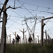 Silvia Ferrante walks with her family in the vineyard dominated by a high voltage pylon. The couple had decided to leave the chaos of Rome to raise their child, Libero, in the unspoiled nature. They have reinvented their lives to chase this dream but right after moving in, a few months after the birth of their son, they found out that a 70 meters high transmission tower would be built within 50 meters from their house.