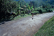 Child on Country Road - Portland Jamaica