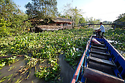 Mekong Delta. Motorboat carefully passing water hyacinths which easily wrap themselves around the screw.