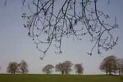 Distant trees and an English landscape