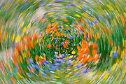 Swirling wildflower abstract, Tehachapi Mountains, Angeles National Forest, California