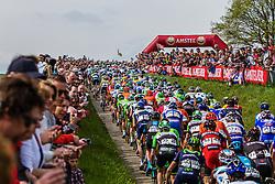 Peloton at Gulpenerberg, Gulpen, Amstel Gold Race, 20th April 2014, Photo by Thomas van Bracht / PelotonPhotos.com