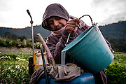 A labourer pours a mixture of groundwater and powdered herbicide into his chemical spraying backpack.