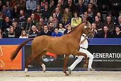 455 - Gladstone<br /> KWPN Stallion Selection - 's Hertogenbosch 2014<br /> © Dirk Caremans