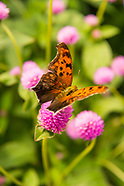 20170727 Chatfield Butterfly House