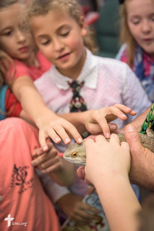 4th grade teacher Craig Schaubs lets students handle a classroom pet animal on Thursday, Oct. 27, 2016, at First Immanuel Lutheran School in Cedarburg, Wis. LCMS Communications/Erik M. Lunsford