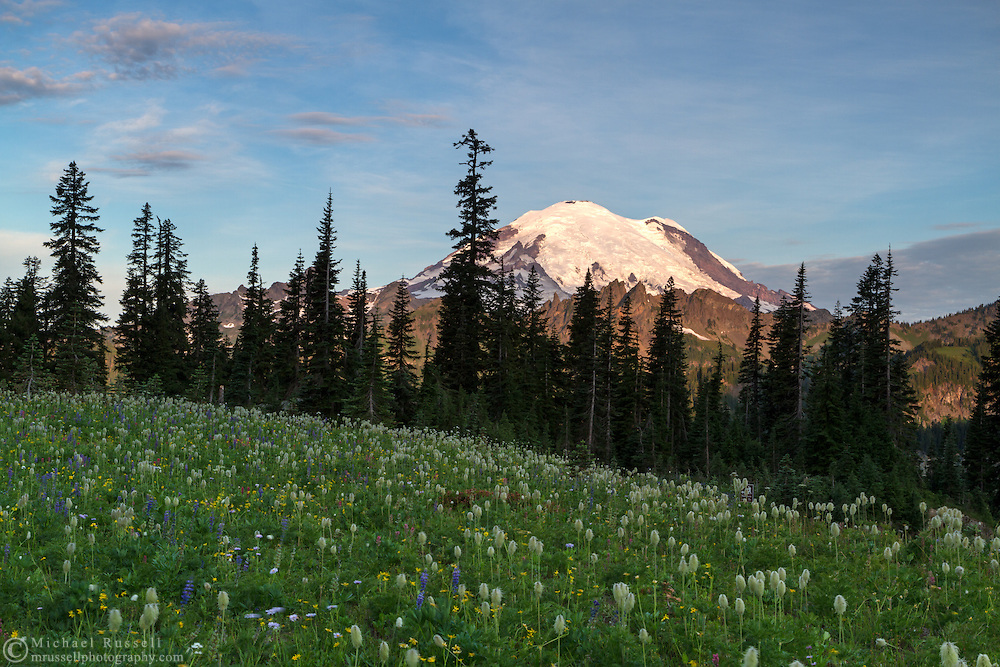 Early morning light on Mount Rainier from a wildflower meadow above Upper Tipsoo Lake - in Mount Rainier National Park, Washington State, USA