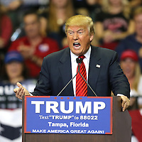 Donald Trump speaks during a rally for the US presidential campaign in Tampa, Florida, America - 12  Feb 2016