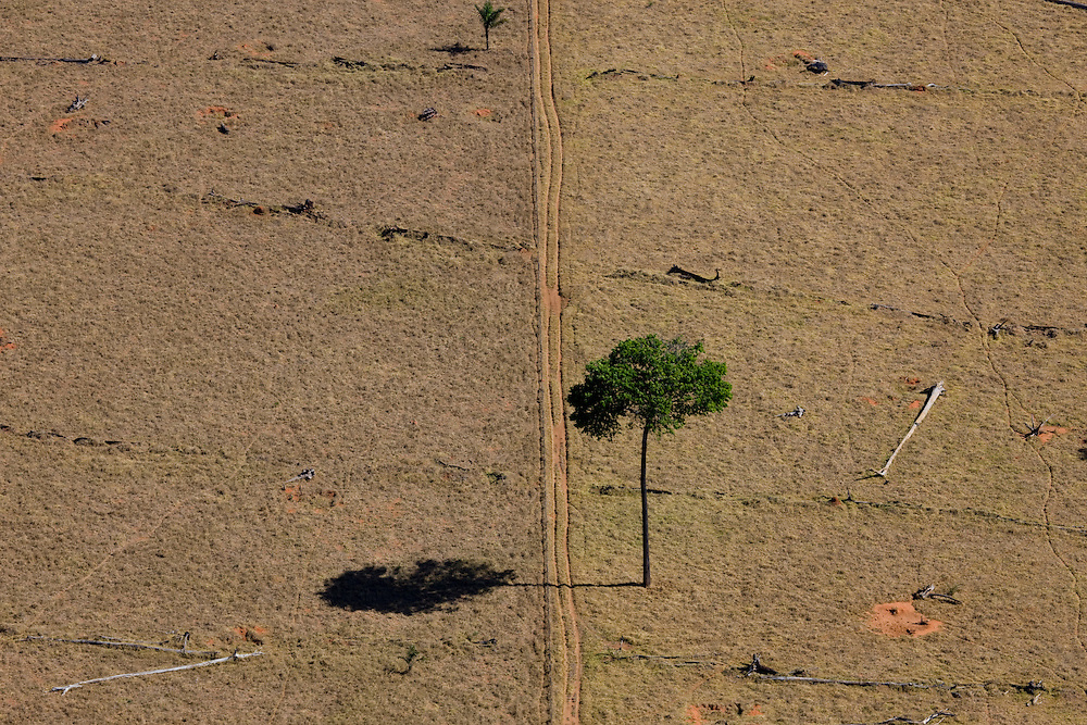 Fazenda Sao Judas Tadeu (cattle farm) in Mato Grosso, Brazil, August 6, 2008. Daniel Beltra/Greenpeace