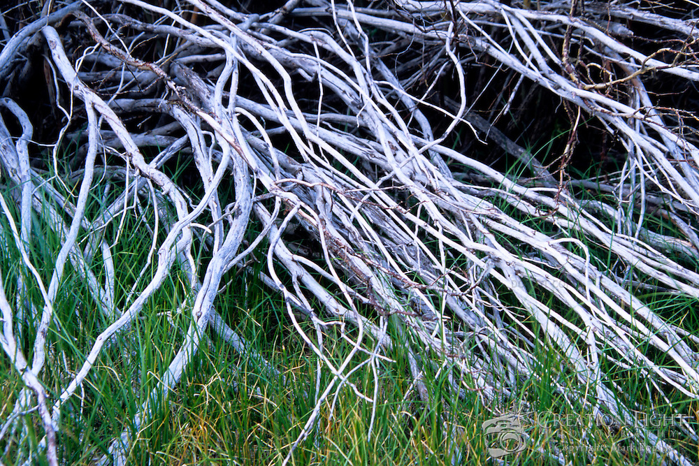 The white, dead branches contrast with the growing, green grass.
