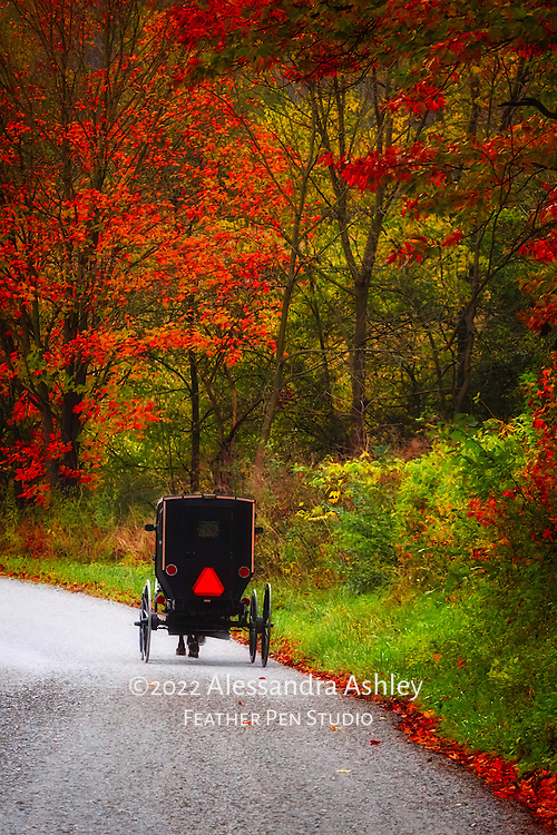 Horse and buggy on curved country road, with fall foliage and fallen leaves.  Amish country, Holmes county, Ohio.