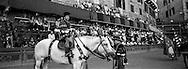 Trecciolino, the Nicchio jokey during the historical parade