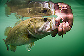 Largemouth Bass Stock Photos