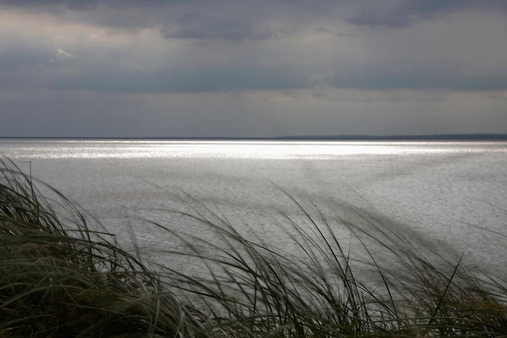 Grass at sandy beach near Crossfarnogue, Ireland