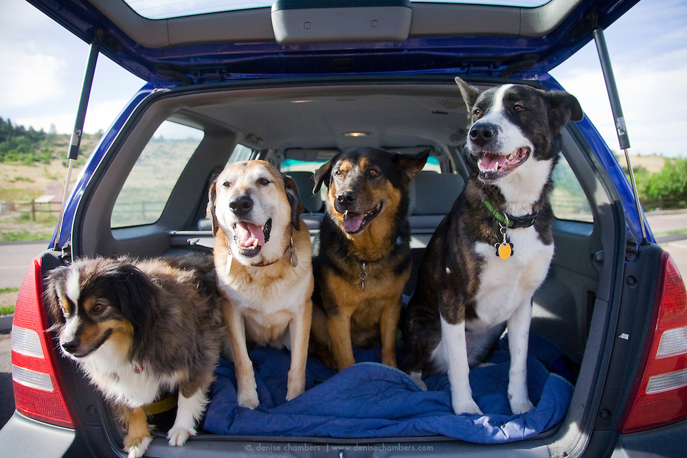 These dogs are ready to head out for a hike at Stratton Open Space in Colorado Springs, Colorado.